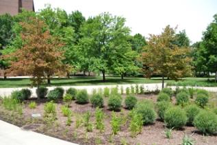 Hillenbrand Harrison Rain Garden (2).jpg