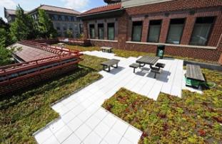 Schleman Green Roof.jpg